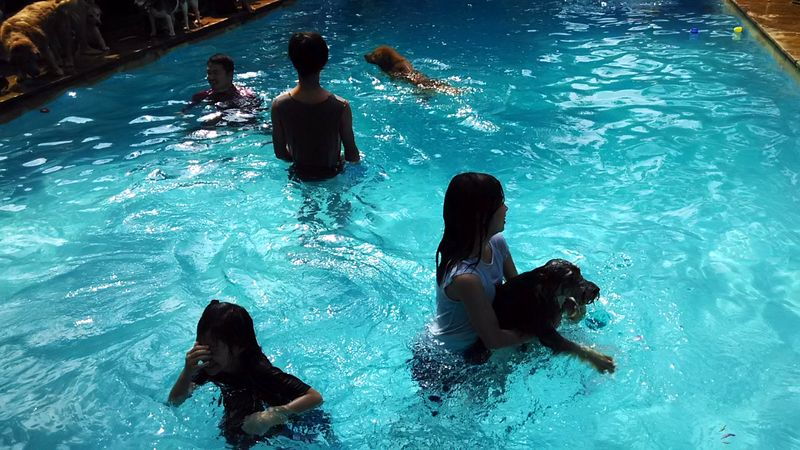 dog_summer_pawty_info_bintaro_1