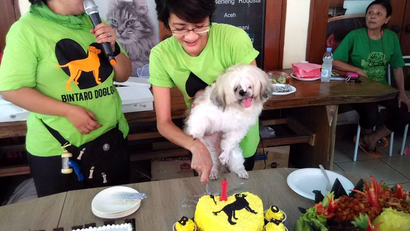 dog_summer_pawty_info_bintaro_3