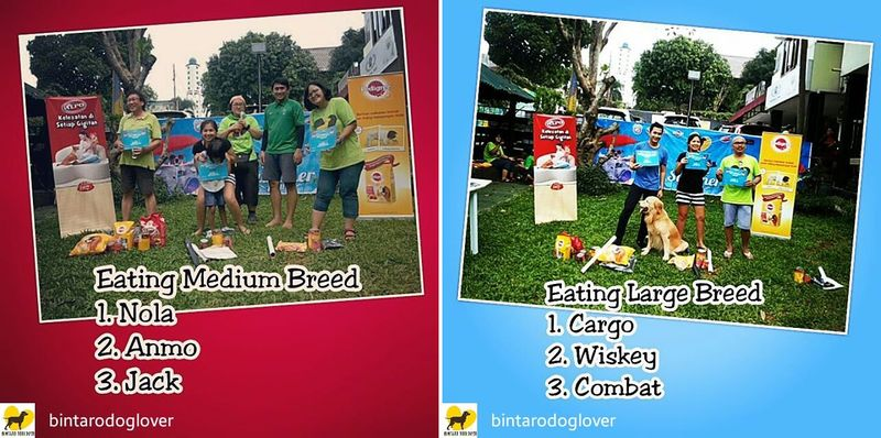 dog_summer_pawty_info_bintaro_4